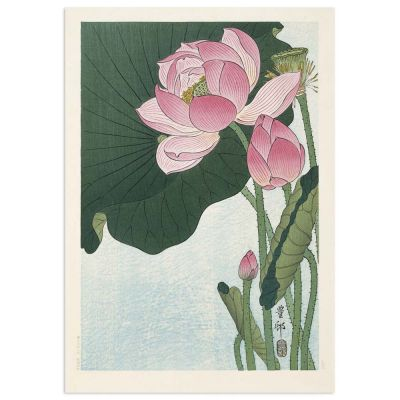 Blooming lotus flower – Ohara Koson Japanese Woodblock Print Poster