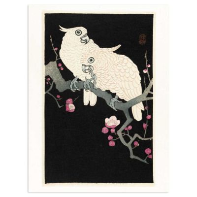 Two Cockatoos and Plum Blossom – Ohara Koson Kachō-e Art Print Poster