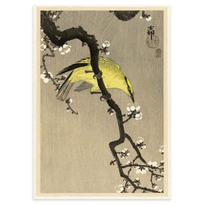 Chinese Oriole on Plum Tree Branch – Ohara Koson Japanese Woodblock Print Poster