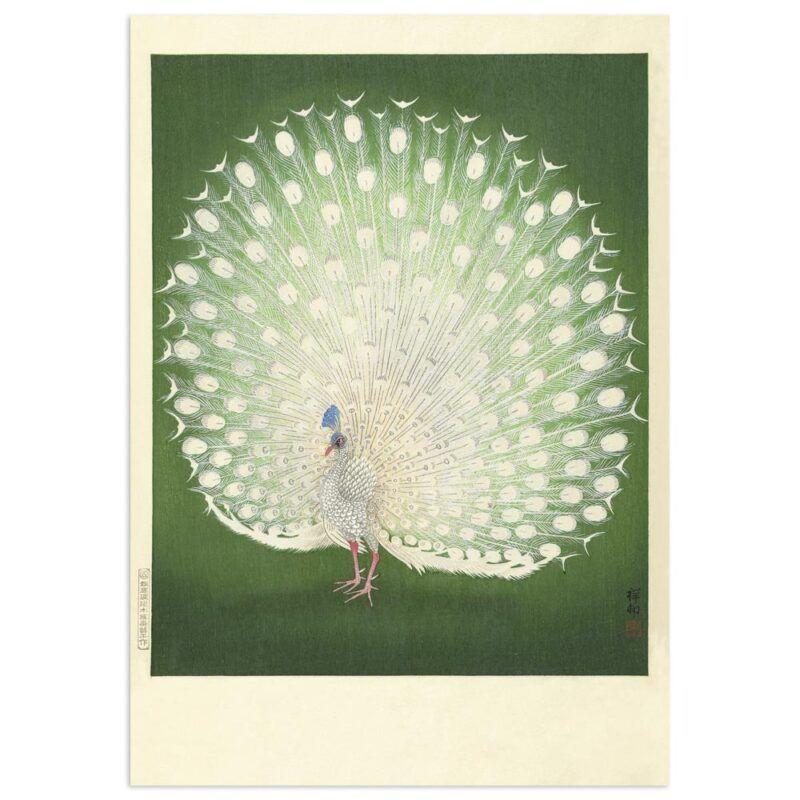 White Peacock - Ohara Koson Art Print 70x100cm