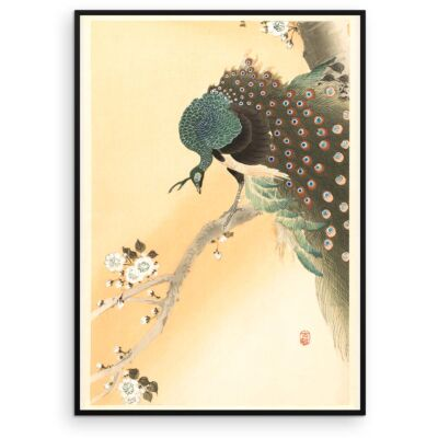 Ohara Koson Poster – Peacock in a cherry tree