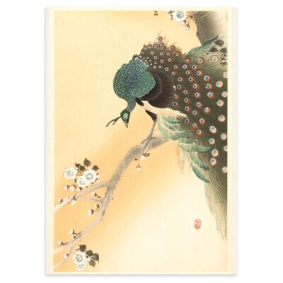 Peacock in a cherry tree – Ohara Koson Poster