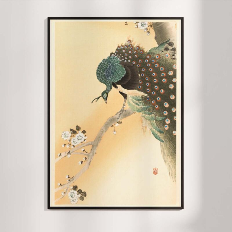 Peacock in a cherry tree - Ohara Koson Poster